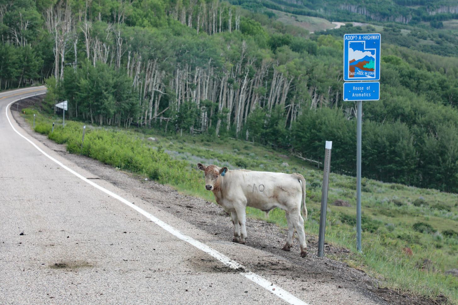 dieren langs de weg